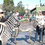 zebra - 03